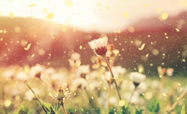 flores y polen que hacen de la primavera una epoca dificil para muchos moteros 900x550 1